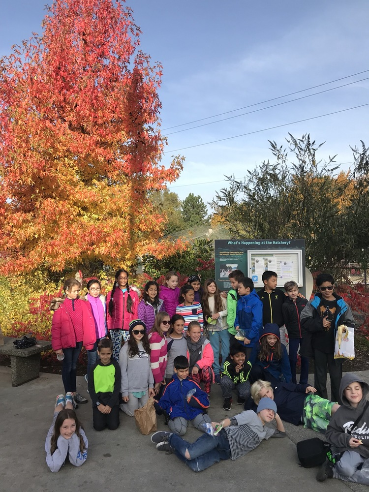 Students at the Issaquah Salmon Hatchery